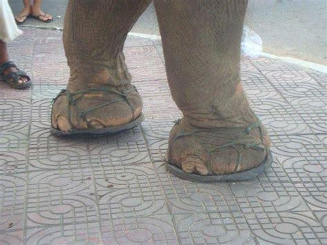 elephant shoes elephant shoes photo