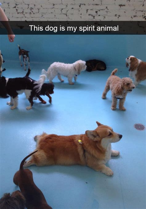 hilarious snapchats  dogs   leading role funny
