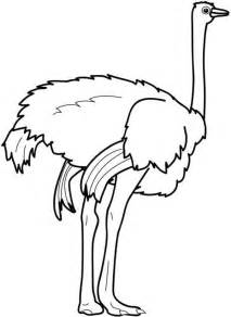 ostrich coloring page free coloring pages of bird