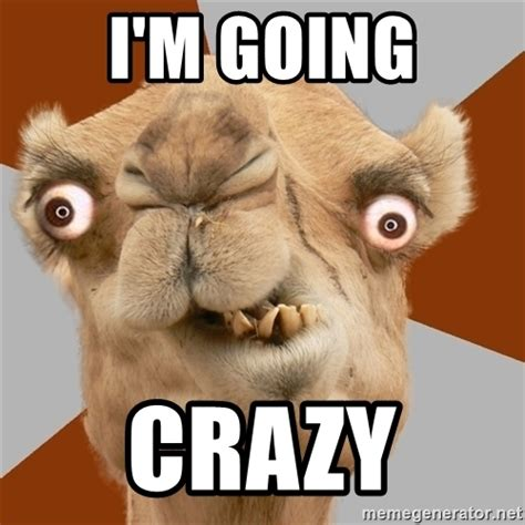 Going Crazy Meme - i m going crazy crazy camel lol meme generator