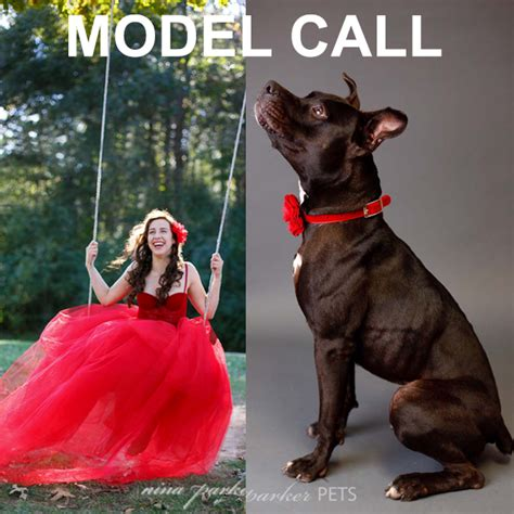 A Call For Model Pets by Model Call Rescue Pitbull Or Lab Glam Owner