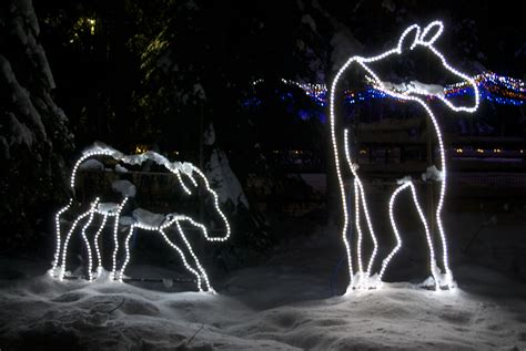 Fun Fun And More Fun This Friday Ak On The Go Alaska Zoo Lights
