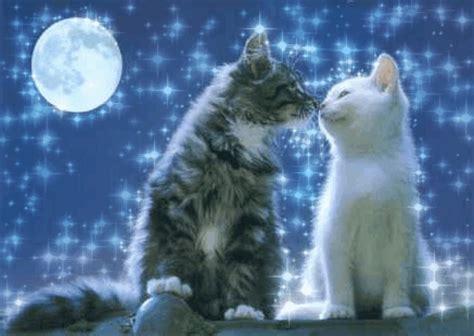 imagenes de amor de gatitos animados gifs animados de amor y gatitos gifs animados
