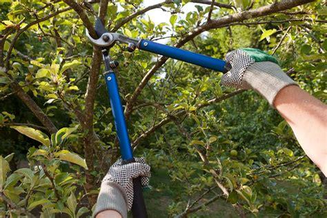 la poda pruning 8467703059 c 243 mo podar los 225 rboles frutales blog de agricultura profesional