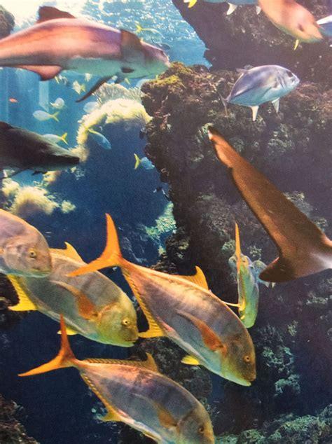 aquarium len la r 233 gion cing le castellas