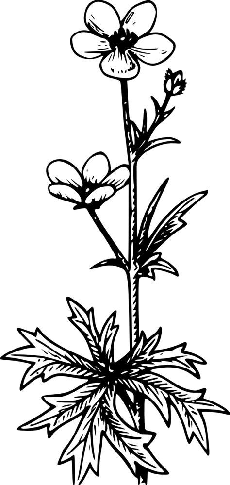 buttercup flower tattoo designs buttercup flower cliparts co