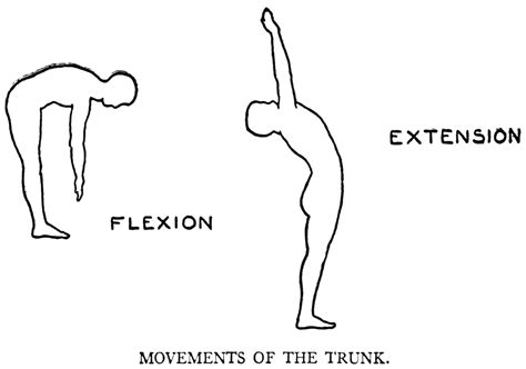 Flexi On voicetalk extension leads flexion