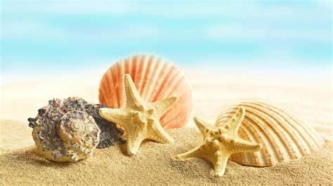 seashell wallpapers  desktop weneedfun
