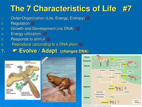 characteristics of biography ppt ppt the 7 characteristics of life 7 powerpoint