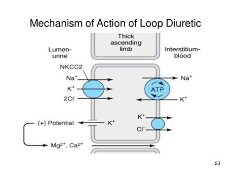 loop layout wikipedia wikipedia the loop diuretic furosemide best free