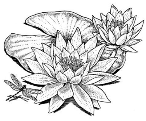 doodle analysis flowers water drawing wonderous water lillies