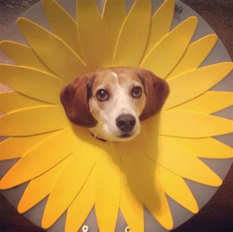 cones for dogs 19 creative pet cones that your pet will even more
