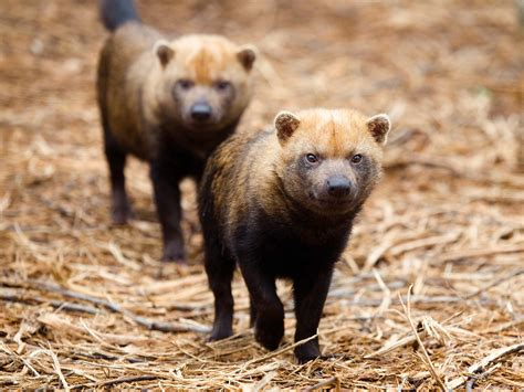 are dogs bush zoo atlanta