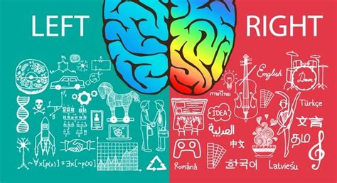 Brain Left Or Right are you left brained or right brained