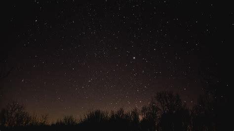 leaves starry horizon night sky trial skies wallpaper