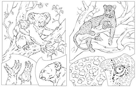 national geographic coloring pages pdf elephant coloring pages national geographic coloring pages