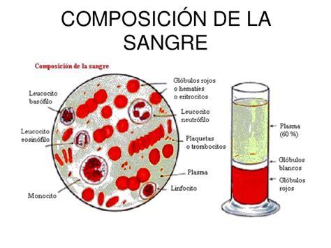 la sangre de los la sangre y su funci 243 n en el organismo