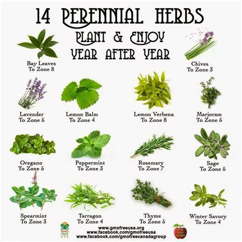 herbs chart one ash plantation homestead perennial herb chart i have