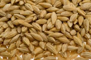 did you know that barley helps to prevent breast cancer