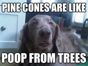 Stoner Dog Meme - meme watch 10 dog is the newest addition to the stoner