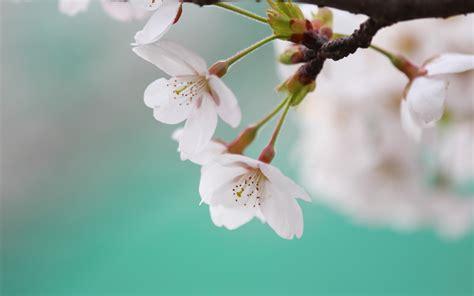 imagenes flores en hd 10 hermosas fotos de flores im 225 genes de flores en hd