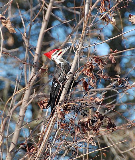 fayetteville is for the birds visit fayetteville wvvisit