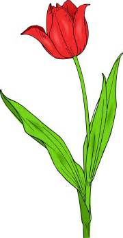 tulip tattoos designs and ideas