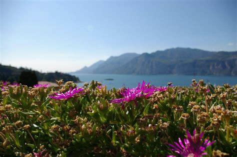 hotels in co de fiori terrazza hotel casa barca fiori wellness hotel casa barca