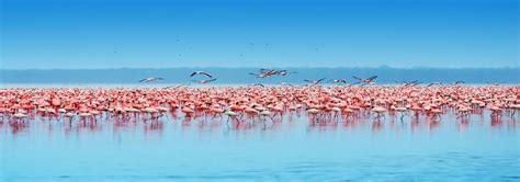 Lake Nakuru National Park Holidays, Book Lake Nakuru