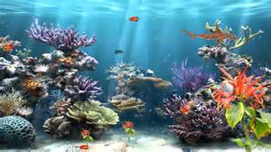 Coral Reef Aquarium Animated Motion Background   YouTube