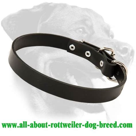 rottweiler leather collars buy leather rottweiler collar walking obedience