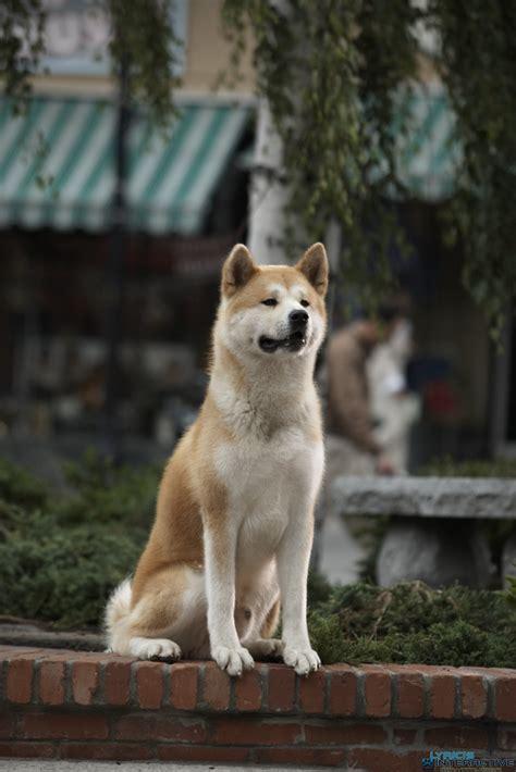 Hatchi avec Richard Gere - L'histoire d'un chien qui est ... Hachiko Movie