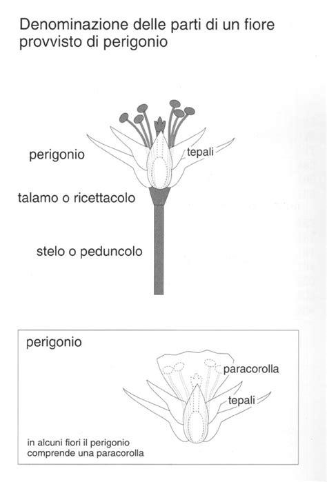 le parti fiore le parti di un fiore