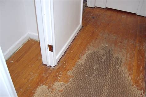 how to remove buildup on hardwood floors removing carpet residue from wood floors carpet vidalondon