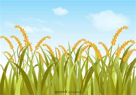 best free vector best 15 free vector rice field illustration cdr