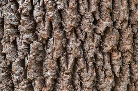 ruff bark photo 1229 08 tree bark on racoon run trail in creek park college station