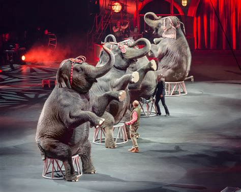 tattoo xtreme act a freak accident ringling bros is closing millennials