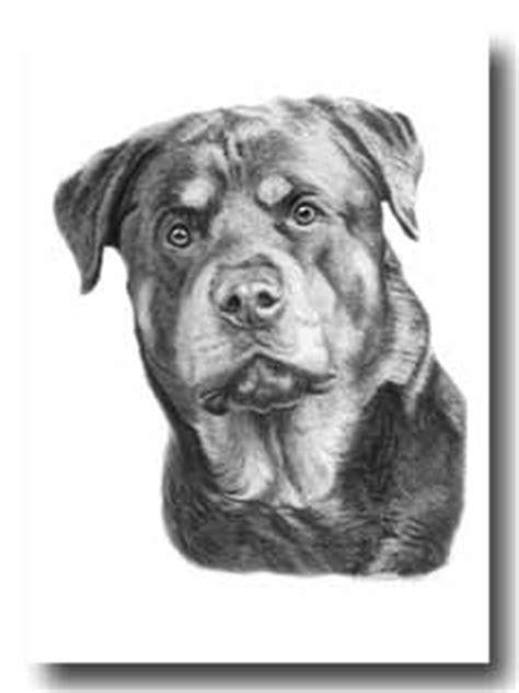 rottweiler pencil drawing dibujos de rottweiler a lapiz