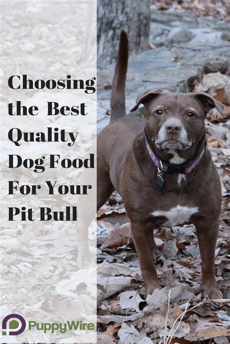 puppy food for pitbulls best food for pitbulls definitive guide top 5 reviews