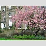 Spring Flower Backgrounds | 1024 x 768 jpeg 420kB