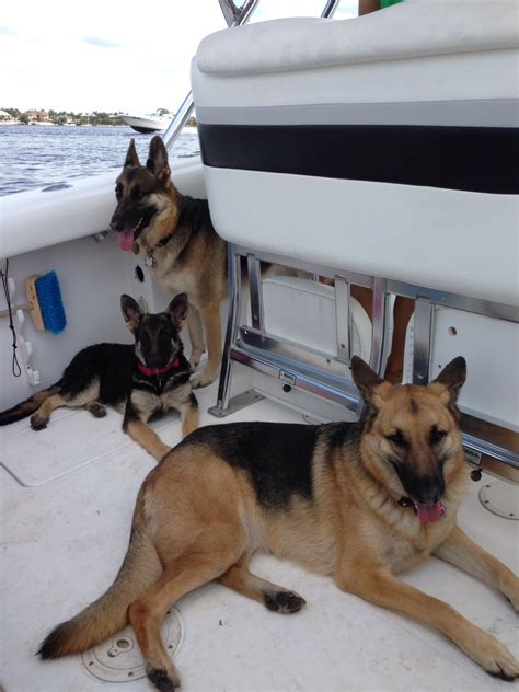 boat names with dog dogs on boats lets see some pics page 32 the hull