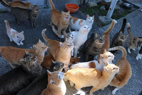 caretaker of japan s cat island is overwhelmed with japan s cat island asks internet for food gets more than