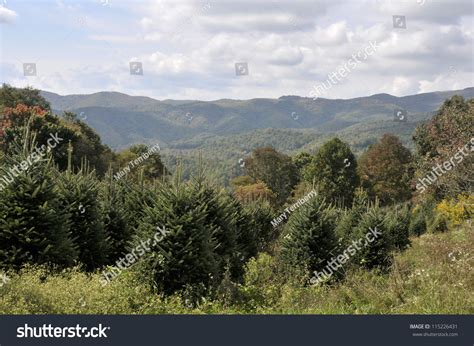 nc mountains tree farm tree farm in the mountains of carolina horizontal with copy space stock photo