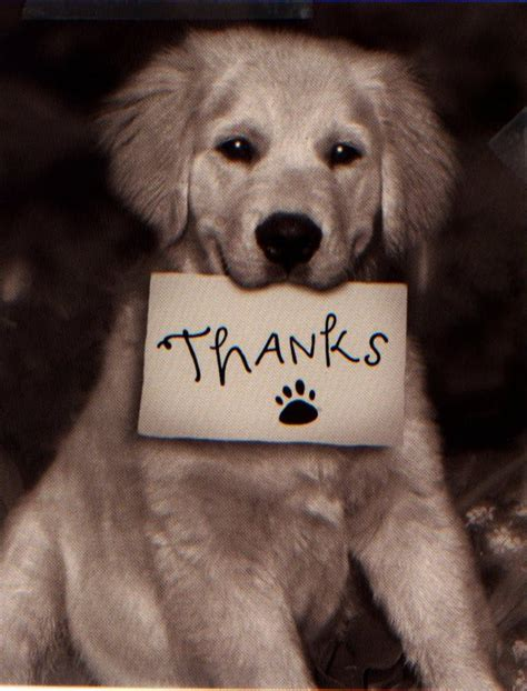 you puppy thank you quotes quotesgram