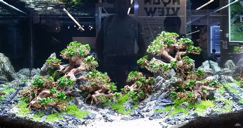 aquascaping shop aquascaping shop 28 images kundenaquarien aquascaping