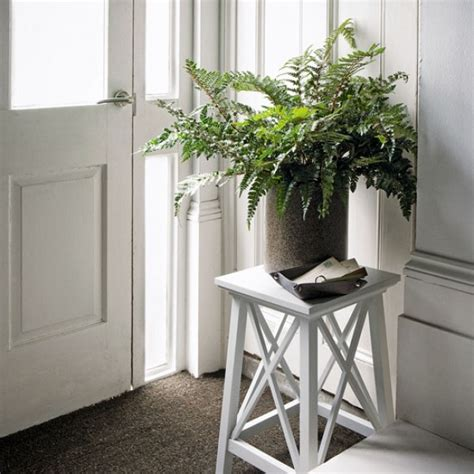 how to revive a plant how to revive a near dead house plant