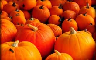 free hd pumpkin wallpapers pixelstalk net