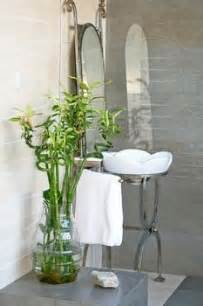 house plants that don t need light indoor plants that don t need sunlight apartment pinterest