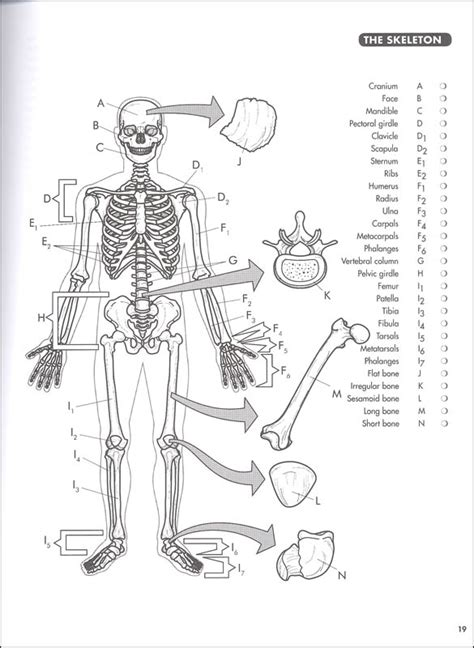 anatomy coloring book princeton review anatomy coloring book princeton review 4ed 005102
