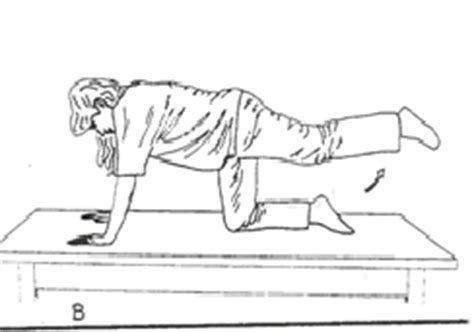 exercises  pregnancy antenatal exercises infofru